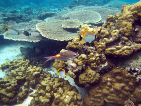 Mahebourg: Best snorkeling site on the island