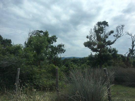Karacabey Longoz Ormanlari