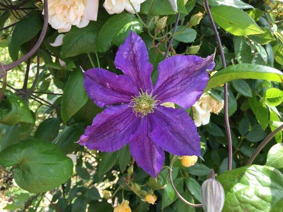 Chelmsford, UK: Flowers