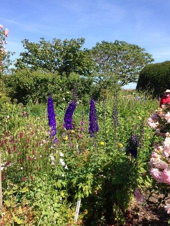 Burton Agnes, UK: Perfect colour! Walled Garden, Agnes Burton Hall, Yorkshire