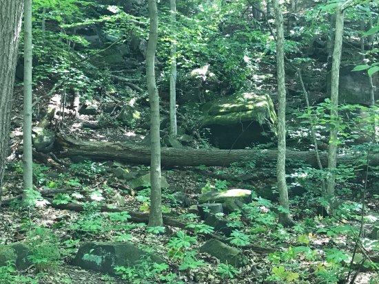 Cuyahoga Falls, OH: photo4.jpg