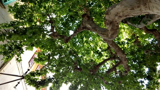 La Cadiere d'Azur, Francia: looking up at tree cover