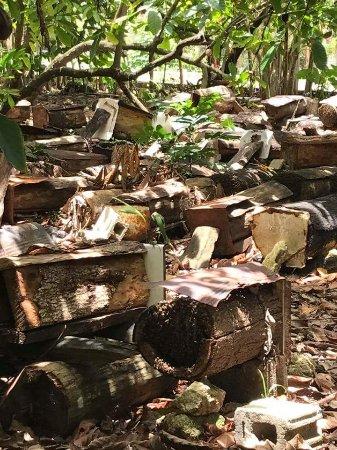 Cabarete, República Dominicana: Bees