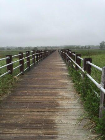 Milford, CT: Through the marsh