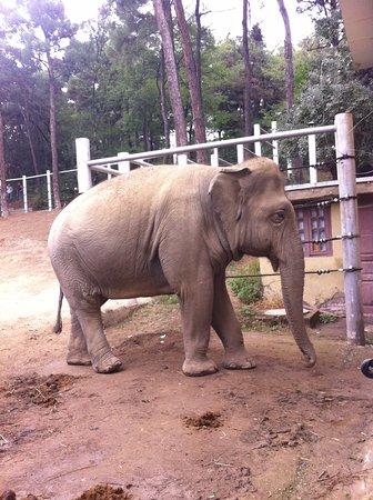 2014 Tiflis hayvanat bahesi a  Picture of Tbilisi Zoo Tbilisi
