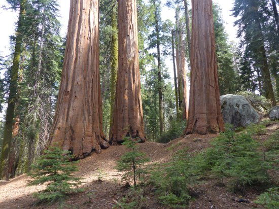 Cort Cottage: Crescent Meadow Trail in Sequoia National Park