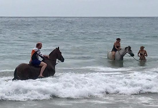 Cocles, Costa Rica: Adults swimming with the horses