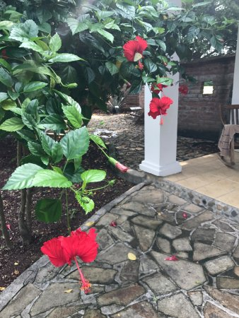 The Surf Sanctuary: Hibiscus blooming and butterflies outside Casita