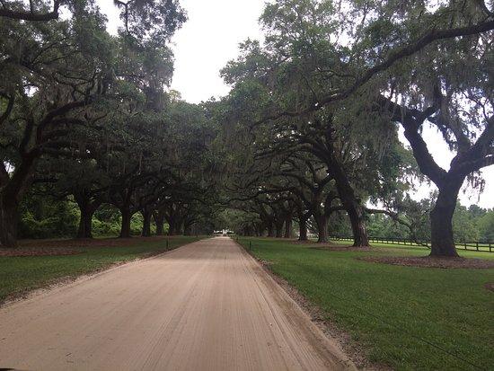 Boone Hall Plantation : photo0.jpg