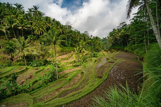 Tanjung Benoa, Indonesia: Tegalalang Rice Terrace