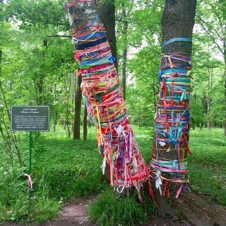 Staraya Russa, Russia: IMG_20170618_185800_808_large.jpg