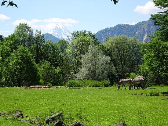Anif, Αυστρία: Salzburg Zoo