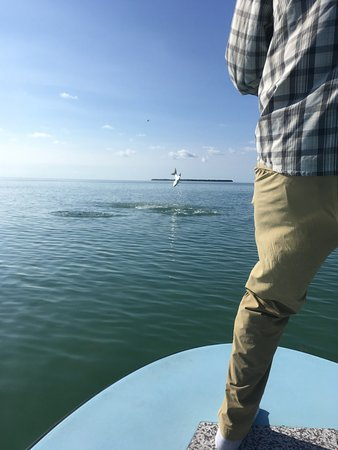 Sugarloaf Key, Флорида: Tarpon jumping on the oceanside.