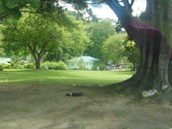 Dominica Botanic Gardens照片