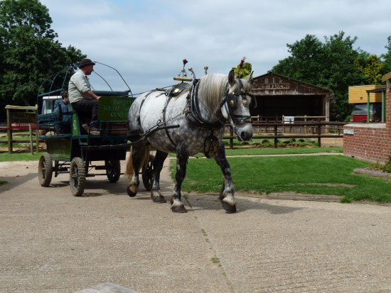 Verwood, UK: Horse drawn rides into the valley
