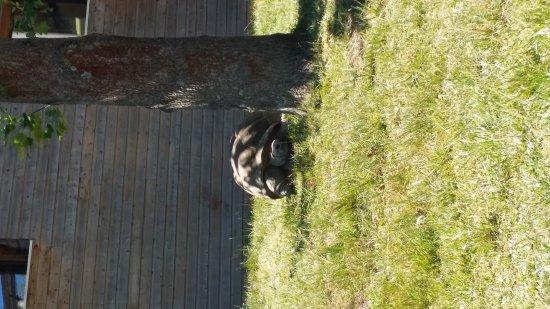 Romaneche-Thorins, France: 20170617_151444_large.jpg
