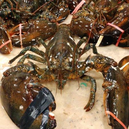 Seabrook, Nueva Hampshire: 12 pound lobster