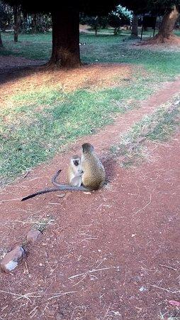 Nairobi Arboretum: photo1.jpg