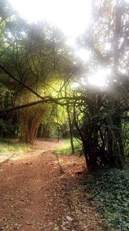 Nairobi Arboretum: photo2.jpg