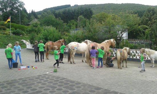 Pony und Reiterhof Mai