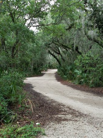 Little Talbot Island State Park: Beautiful canopy of live oaks cover the sandy road within the park