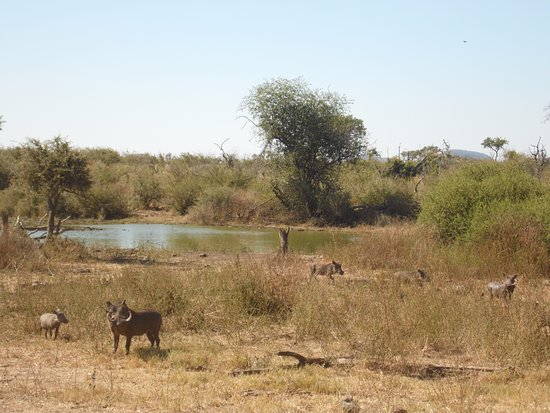 Impodimo Game Lodge: Animali
