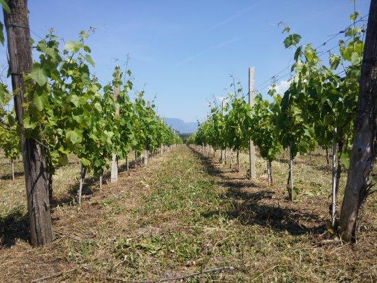 Postiglione, Italien: Panorama Vigneti