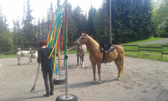 Pony und Reiterhof Mai: Gruppenarbeit auf dem Reitplatz