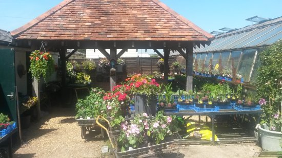 Newchurch, UK: Ager Farm Nursery