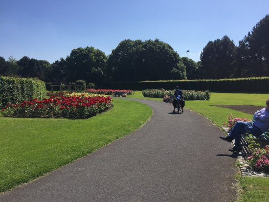 Great Time Of The Year To Visit Rose Garden In Full Bloom Picture Of St Anne 39 S Park Dublin