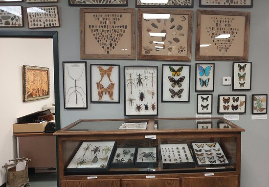 Alamosa, CO: Arrowheads, insects and butterfly exhibit