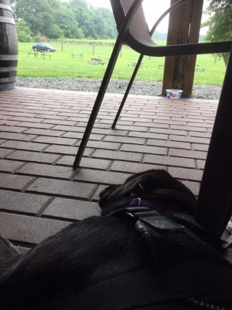 Chadds Ford, PA: This is the view from the CPL Service Puppy view of Penns Woods Winery.