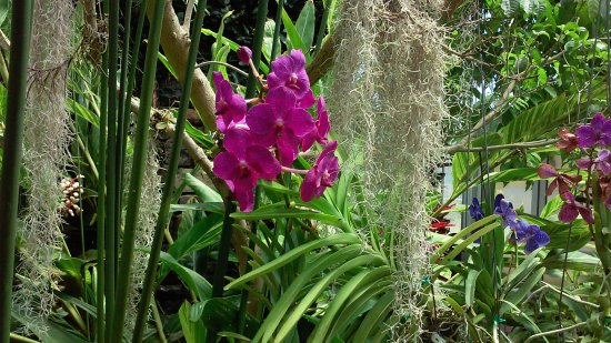 Belmont, Carolina do Norte: orchids