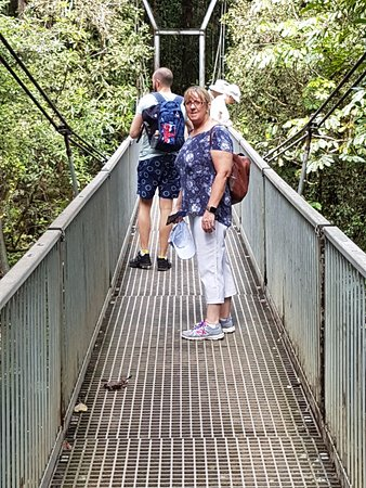 Daintree Region, Australia: On the suspension bridge