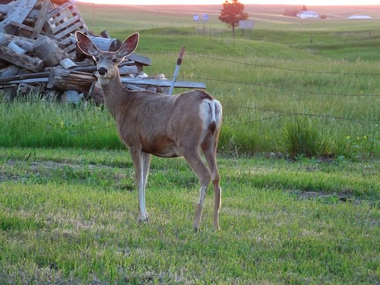 Sawin' Logs: In the morning the deer were grazing in the front yard