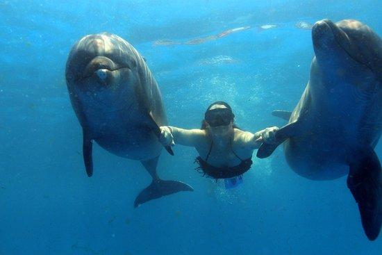 Dolphin Discovery Puerto Vallarta: photo0.jpg