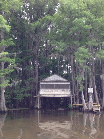 Uncertain, TX: Big Cypress Boat Tour