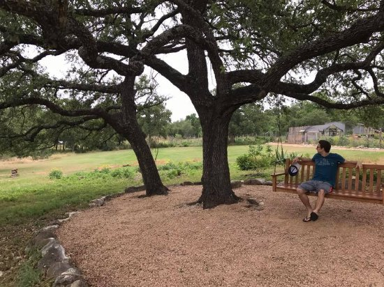 Kyle, TX: One of many quiet resting areas that have a swing bench or hammock.