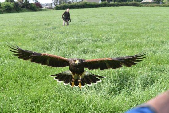 Kilmacthomas, Irlanda: Hawk Walk