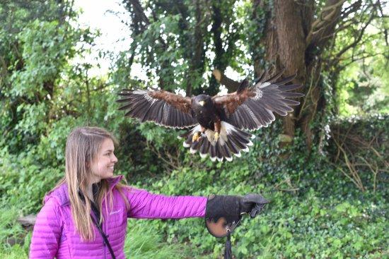 Kilmacthomas, Ireland: Hawk Walk