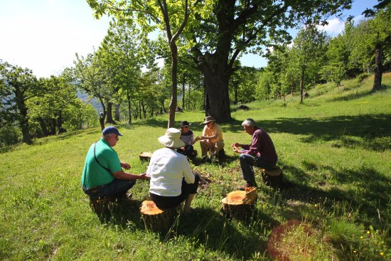 Clavesana, Italie : Chestnut forest