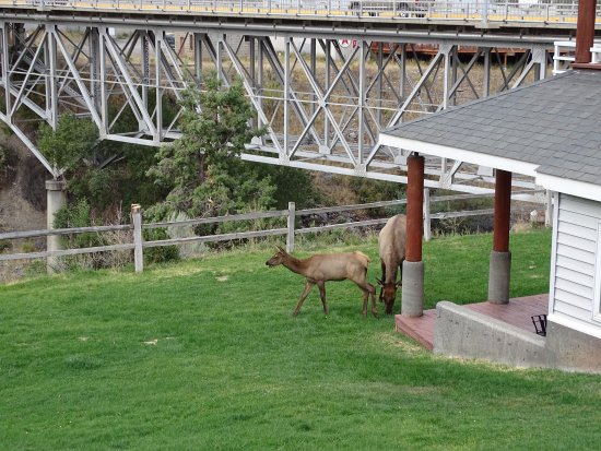 Yellowstone's Absaroka Lodge: visite du matin