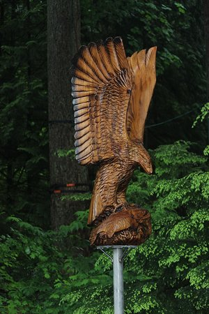 Nord-Vancouver, Canada: nice eagle !