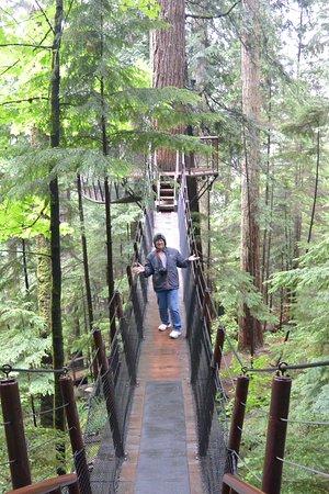 North Vancouver, Canada: treetop bridge