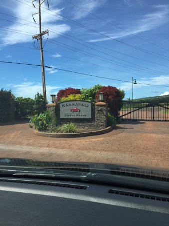 Ka'anapali, HI: Coffee farms