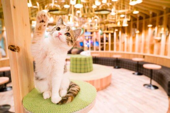 Cat Café Mocha, Akihabara
