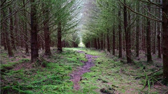 Strabane, UK: Carrickaholten Forest. Killeter Village. Co Tyrone. 1 of the 3 suited for walking.