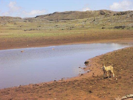 Oromiya Region