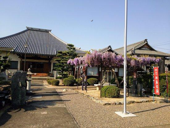 Kameyama, Ιαπωνία: 藤が満開