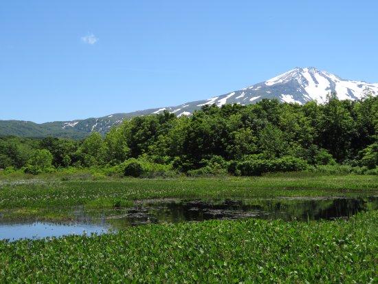 Kuwanokidai Wetland